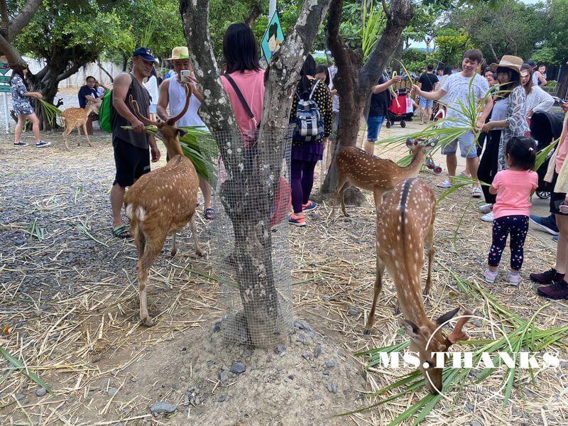 鹿境梅花鹿生態園區